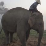 Elephant Kingdom (Chiang Rai)