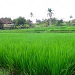 A Day In Ubud (Bali)