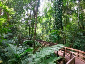 Daintree Visitors Centre