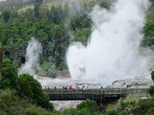 Rotorua geysers